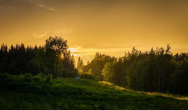 Krajina plná stromov.jpg